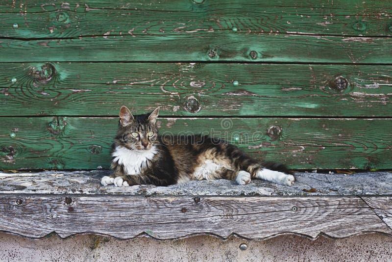 Łgarski kot fotografia royalty free