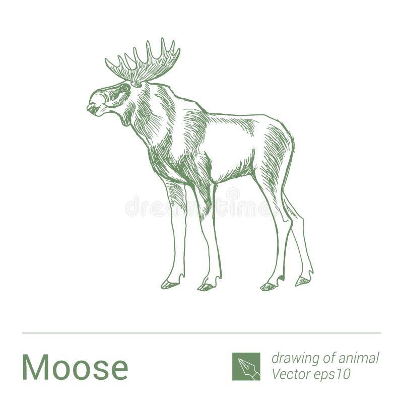 Łoś amerykański, rysować zwierzęta, vectore royalty ilustracja