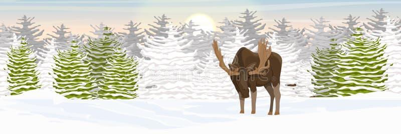 Łoś z dużymi rogami chodzi przez śnieżystej doliny świerkowy las na horyzoncie Zima royalty ilustracja