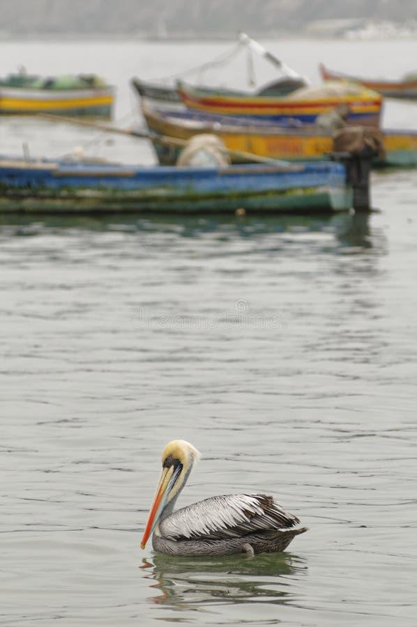 Łodzie rybackie, molo i pelikan, chorrillos, Lima, Peru wodny nieba clouid obraz royalty free