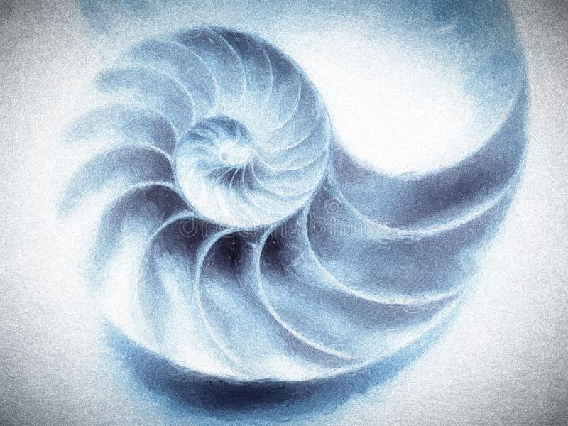 Łodzik Shell Textured obrazy royalty free