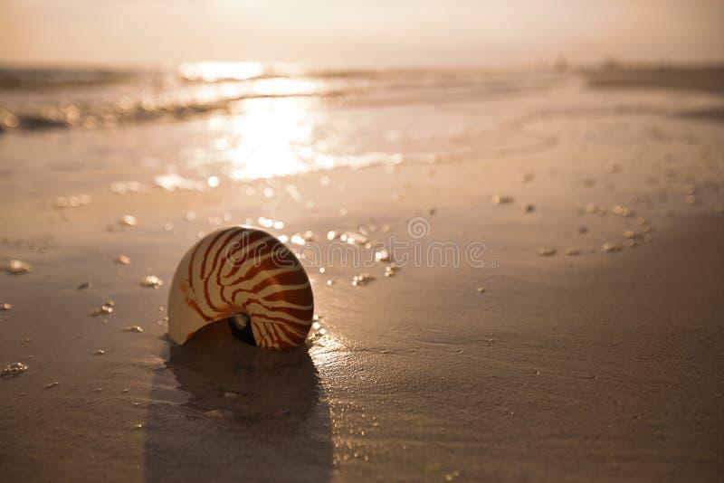 Łodzik skorupa na dennym ocean plaży piasku z ciemnym zmierzchu światłem zdjęcia royalty free