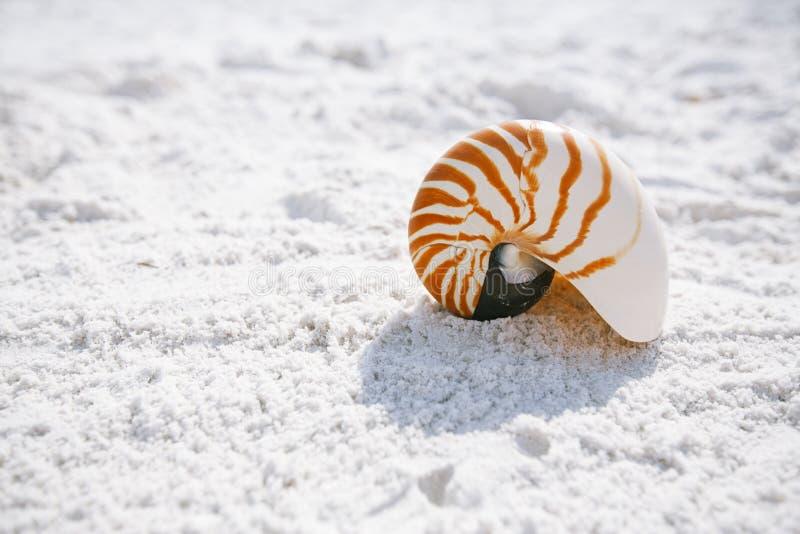 Łodzik skorupa z morze fala, Floryda plaża pod słońca ligh obrazy stock