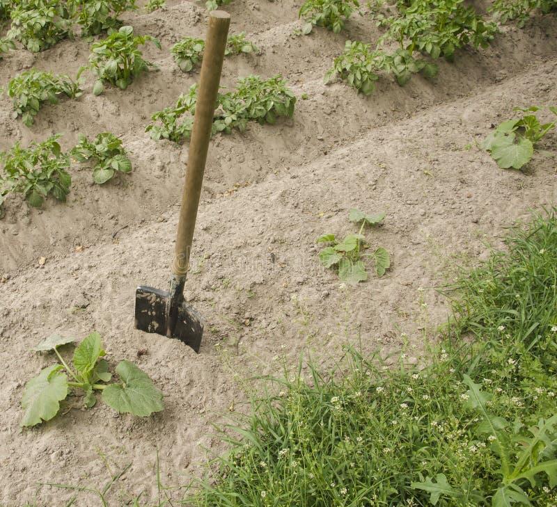 Łopata wtyka w ziemię w ogródzie zdjęcie stock