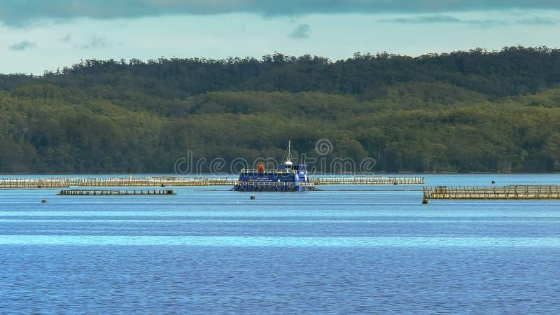 Łososia gospodarstwo rolne pisze macquarie schronienie widzieć od Gordon rzecznego rejsu jak zdjęcia stock