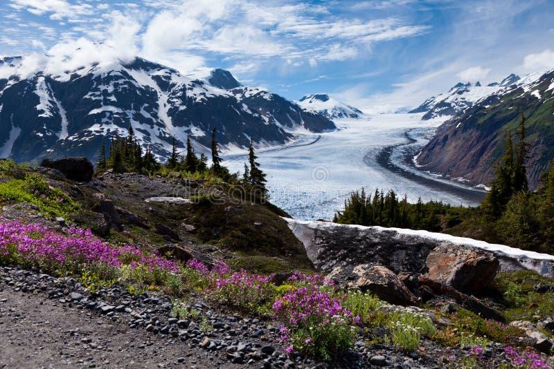 Łososiowy lodowiec fotografia stock