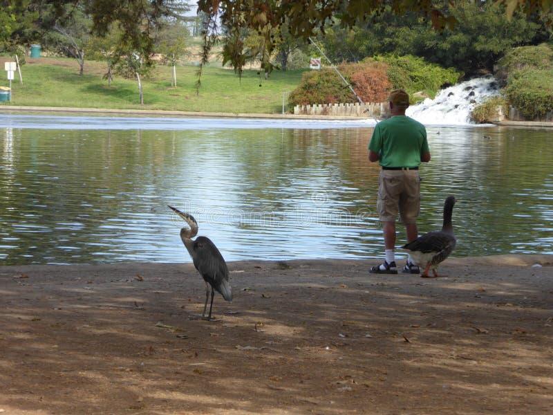 Łowić przy Jeziornym balboa w Anthony C Bieilenson park 80 akrów wody rekreacyjna łatwość obrazy royalty free