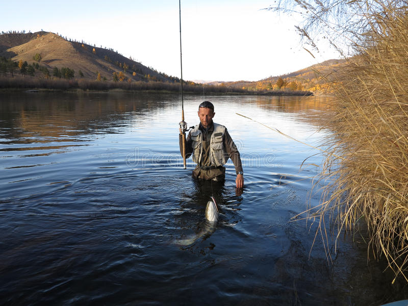 Łowić - taimen łowi w Mongolia zdjęcie stock