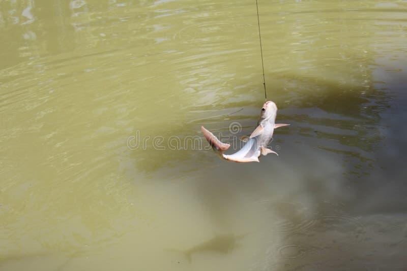 Łowić w zielonym jeziorze obrazy stock