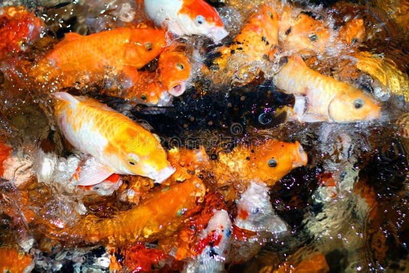 łowi głodnego obraz stock