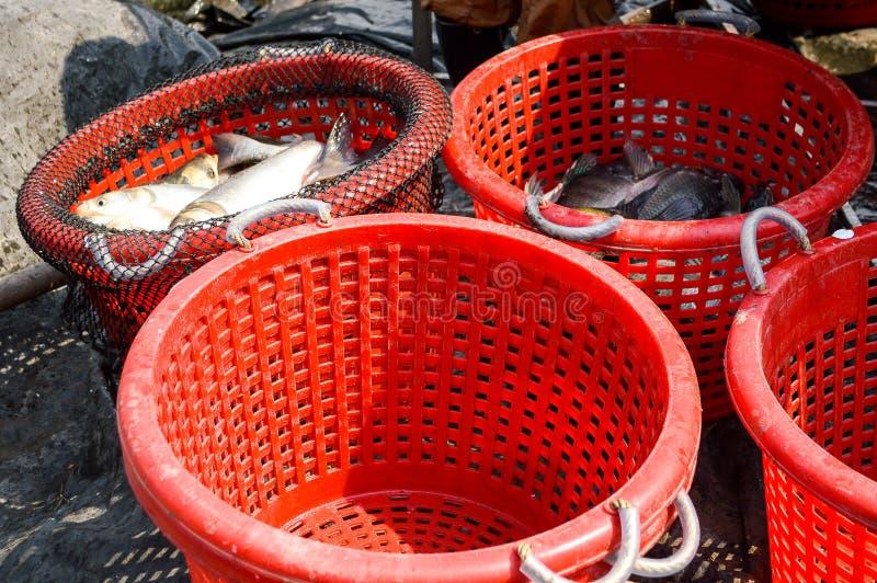 Łowi w czerwonym koszu w rybołówstwo kraju Tajlandia fotografia stock