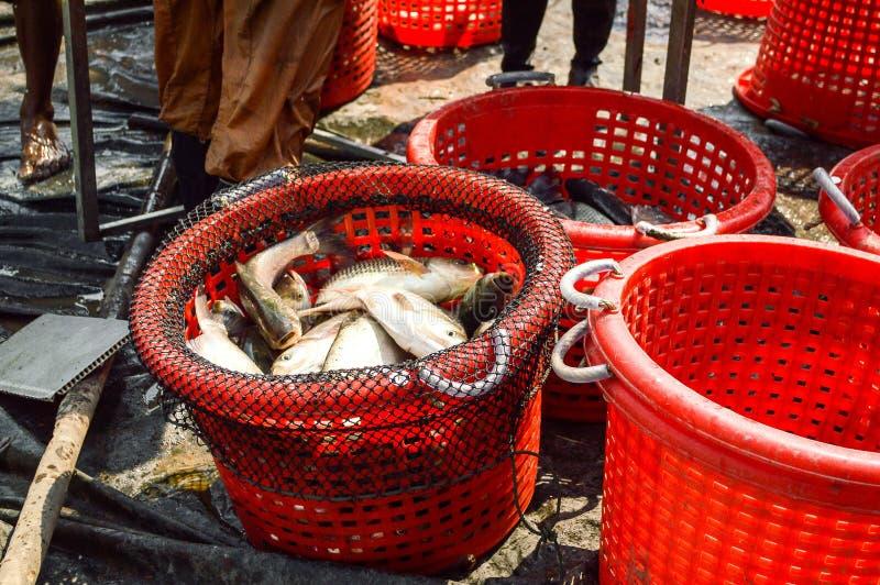 Łowi w czerwonym koszu w rybołówstwo kraju Tajlandia zdjęcia stock