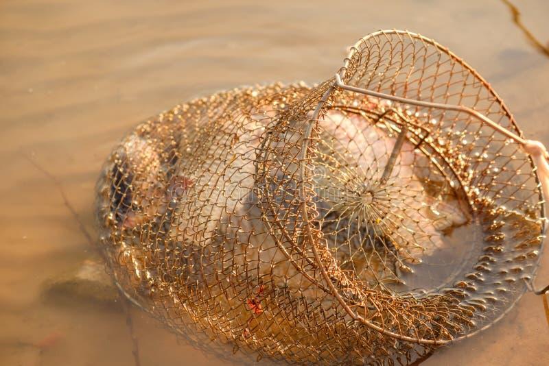 Łowi w klatce, łowi na rzece w wakacjach letnich fotografia stock