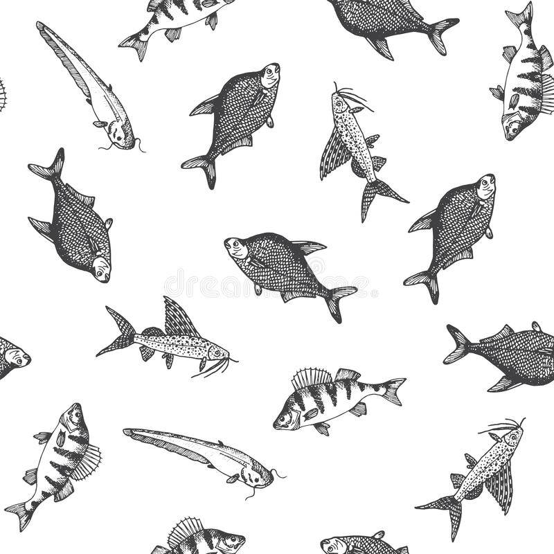 Łowi wzór Nakreślenie karp Ręki rysować wektorowe ilustracje Wektorowe morza i oceanu istoty dla owoce morza menu projekta royalty ilustracja