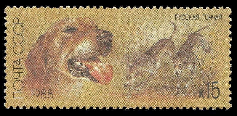 Łowieccy psy, Rosyjski ogar obraz stock