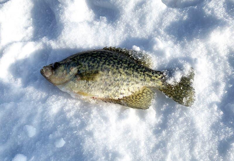 Łowienie na lodzie i śniegu obrazy royalty free