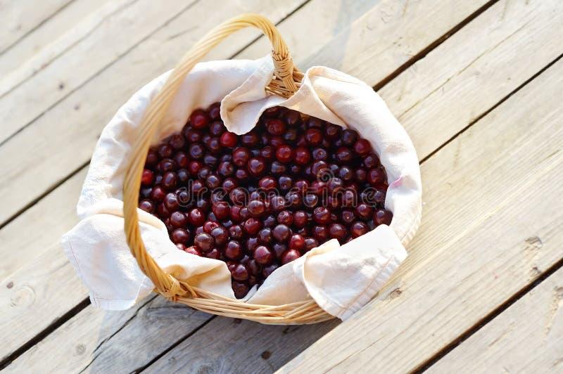Łozinowy kosz z dojrzałą jagodową wiśnią fotografia royalty free