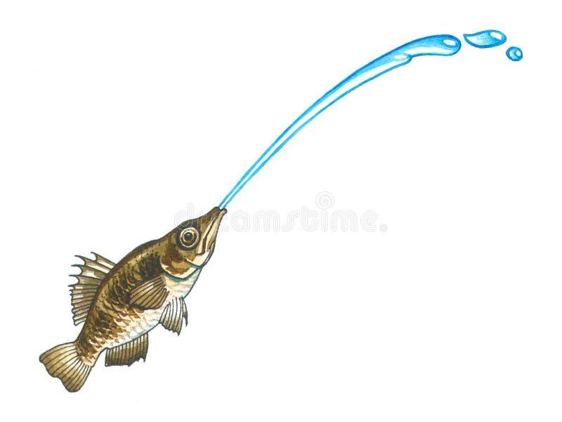 Łuczniczki ryba ilustracji
