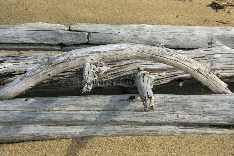 Łuk bielący driftwood logował się plażę, Maine obrazy stock