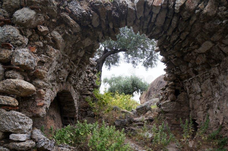 Łuk i drzewo oliwne zdjęcie stock