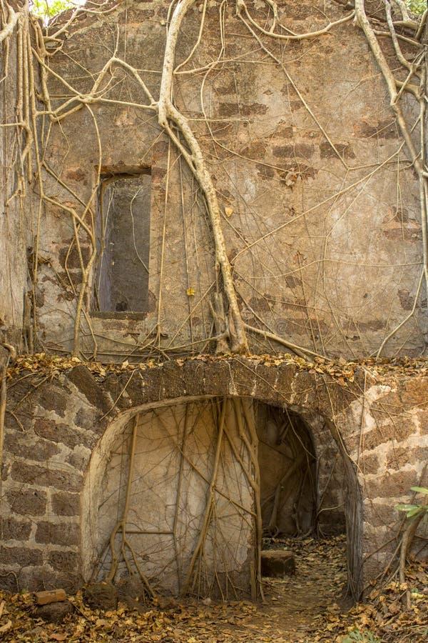 Łuk w starej szarości ścianie rujnujący dom zaniechany forteca przerastający z banyan drzewami obrazy stock