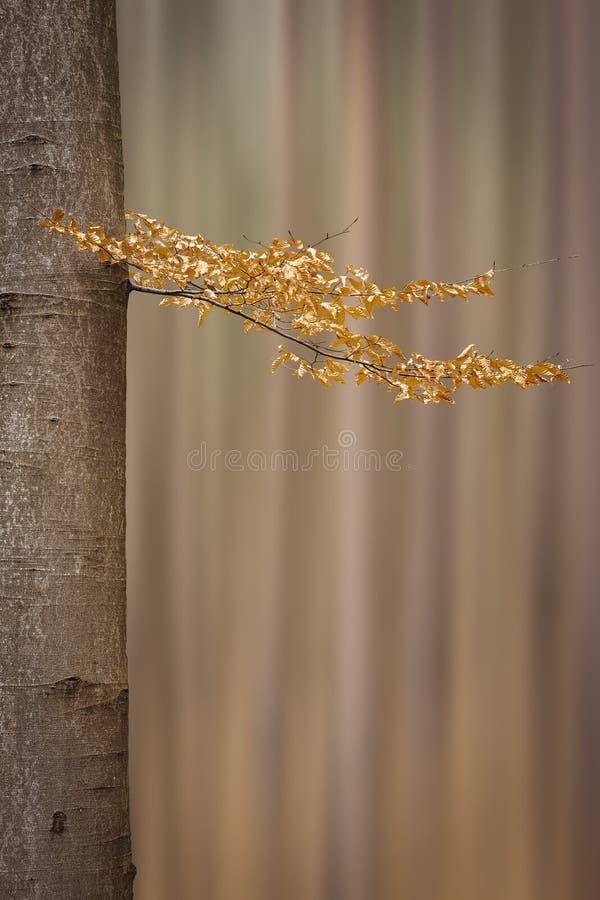 Łuk z gałęzią z wierzchołkami, który jest sam Rozmyte drzewa są w tle Republika Czeska fotografia royalty free