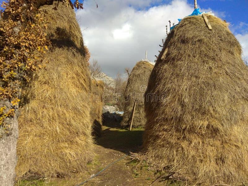 Łupa wysuszona trawa obraz stock