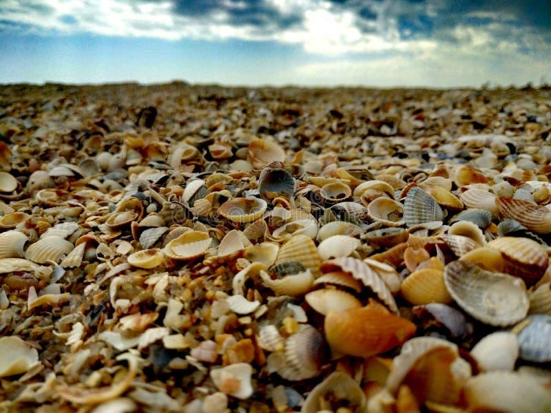 Łuska plażę zdjęcie royalty free