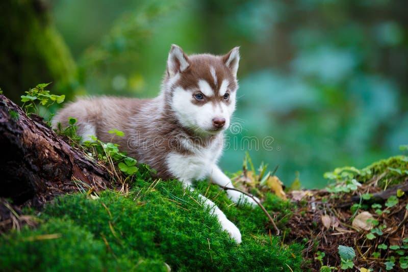 Łuskowaty szczeniak w dzikim lesie zdjęcia stock