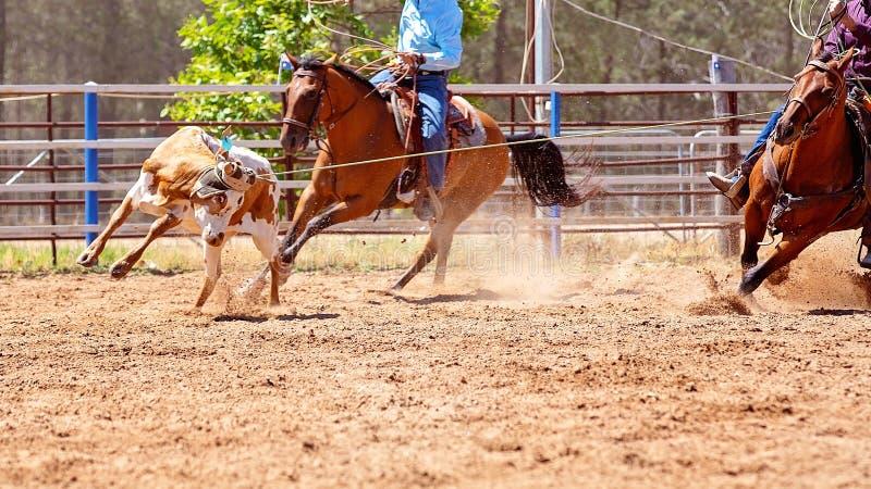 Łydka Roping Przy Australijskim kraju rodeo zdjęcie stock