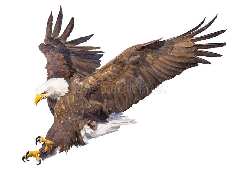 Łysego orła nurkowania ataka ręki farba na białego tła przyrody zwierzęcym wektorze i remis ilustracja wektor