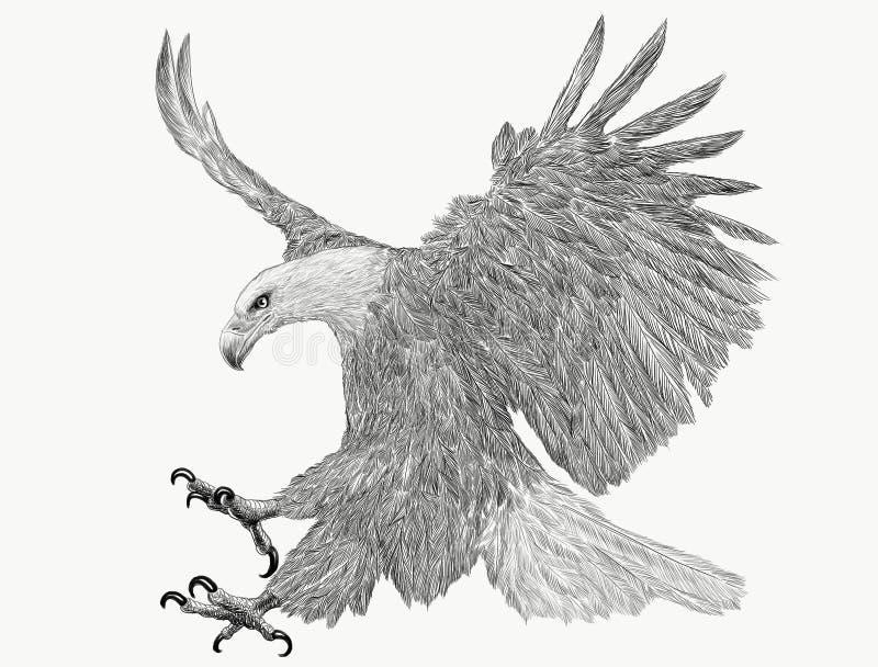 Łysego orła nurkowania ataka ręki remisu monochrom na białym tle ilustracja wektor