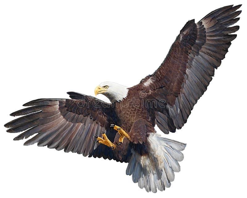 Łysego orła nurkowania wektor ilustracji