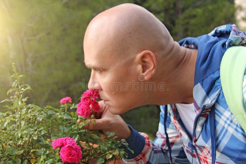 Łysy mężczyzna obwąchuje różowe róże Wzruszający mężczyzna, emocje człowieku fotografia royalty free
