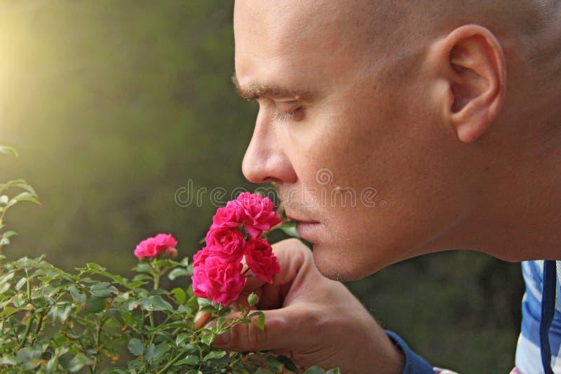 Łysy mężczyzna obwąchuje różowe róże Wzruszający mężczyzna, emocje człowieku obrazy royalty free