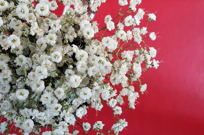 Łyszczec biali kwiaty fotografia stock