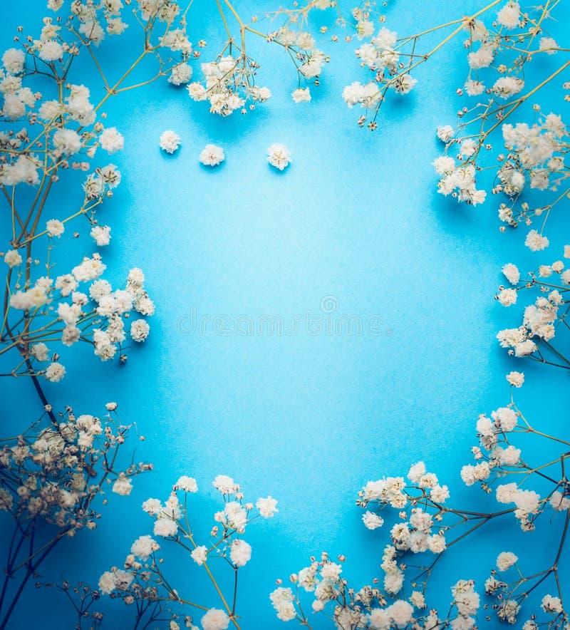 Łyszczec, dziecka ` oddech kwitnie na błękitnym tle Białych kwiatów rama, odgórny widok zdjęcia stock