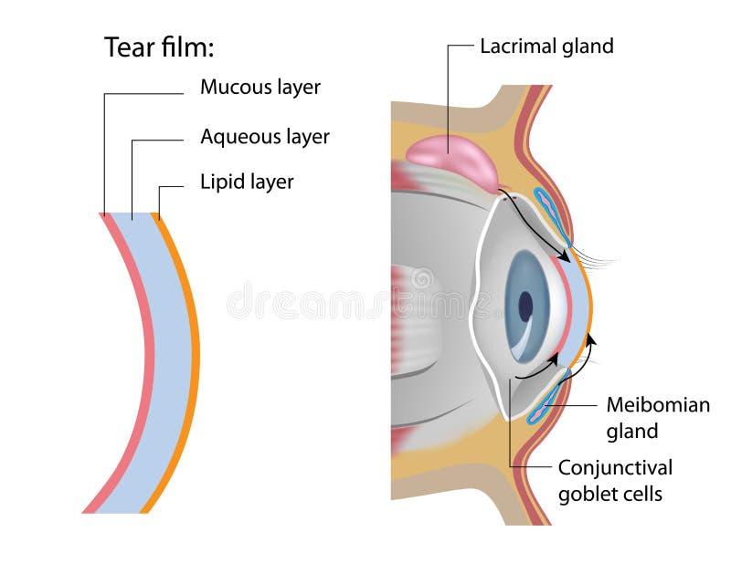 Łzy ekranowa formacja ilustracja wektor