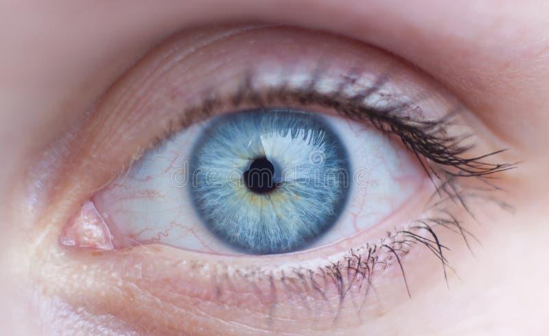 œil bleu femelle photos stock