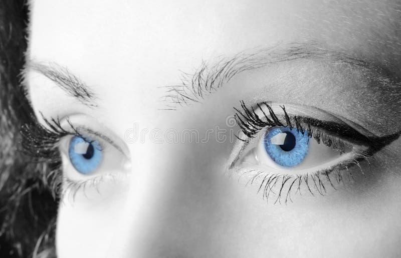 œil bleu femelles images libres de droits