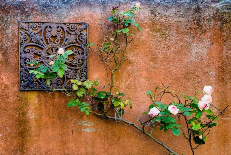 Ściana róże fotografia royalty free