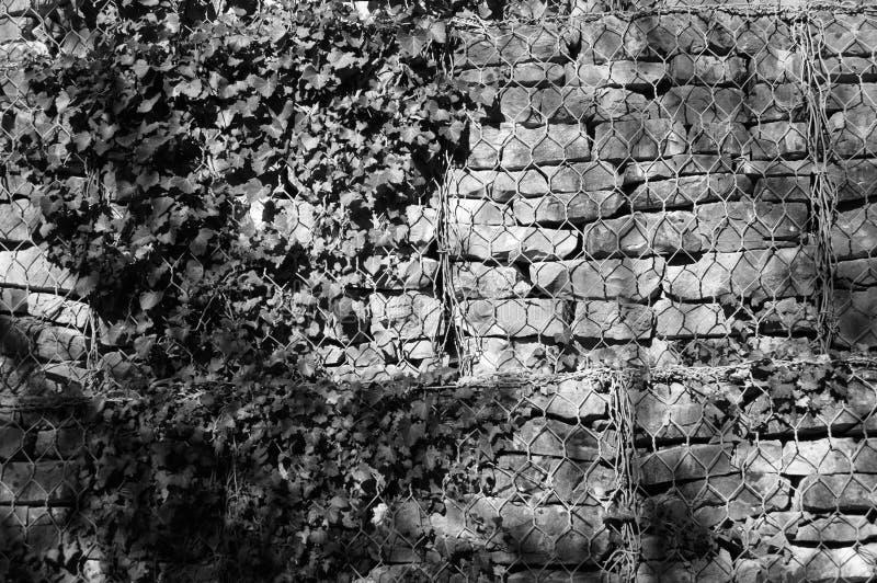 Ściana z cegieł z rośliny tłem obraz royalty free