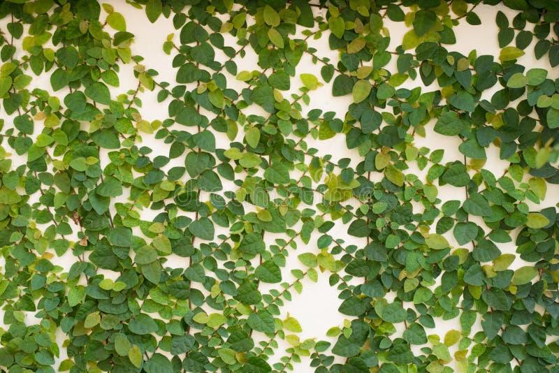 Ściana z cegieł tła tekstura zdjęcie royalty free