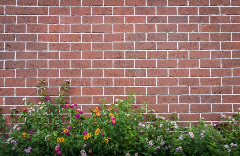 Ściana z cegieł z kwiatem zdjęcie stock