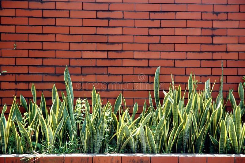 Ściana z cegieł z ornamentacyjnymi roślinami fotografia stock