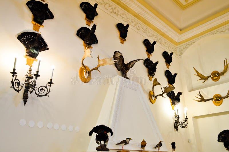 Ściana z naturalnymi łowieckimi trofeami, faszerujący ptaki, zwierzęta, rogi łoś amerykański i rogacze, verdure pozyskiwania środ fotografia royalty free