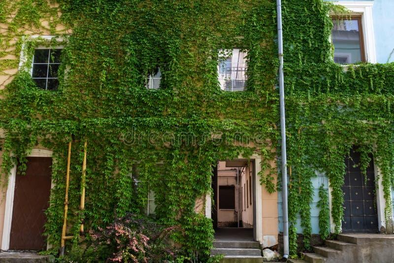 Ściany starzy domy przerastają z bluszczem obraz stock