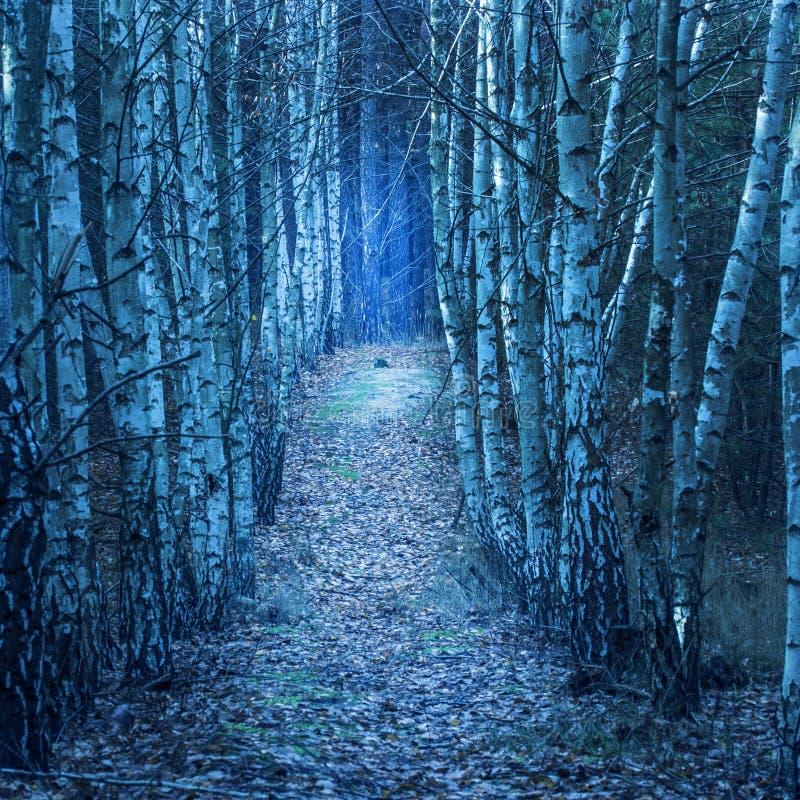 Ścieżek prowadzenia przez nocy brzozy alei zdjęcie stock