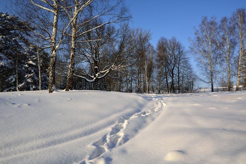 Ścieżka ślada w śnieżnym lesie fotografia stock