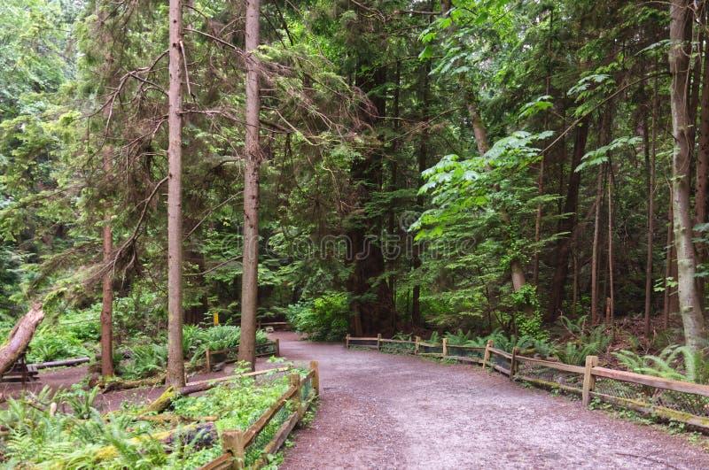 Ścieżka żwirowa z drewnianym płotem w gęsto zielonym lesie iglastym fotografia royalty free